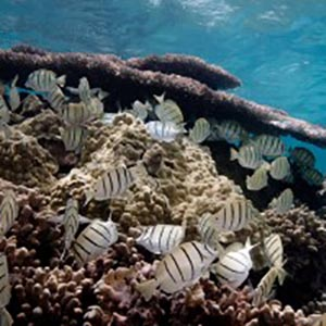 Ocean Acidification Impacts due to Carbon Emissions more Severe than Thought