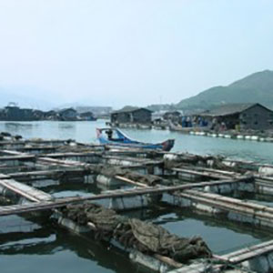 The Promise of OTEC Aquaculture