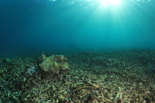 dead coral reef destroyed by global warming climate change pollution and overfishing