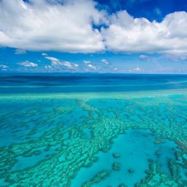 A Final Farewell to the Great Barrier Reef