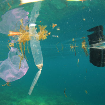 The Great Pacific Garbage Patch Scheduled for Clean Up in 2020